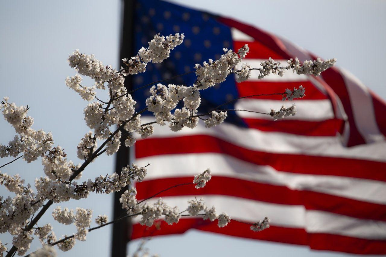 bandeira dos estados unidos com galho florido em frente